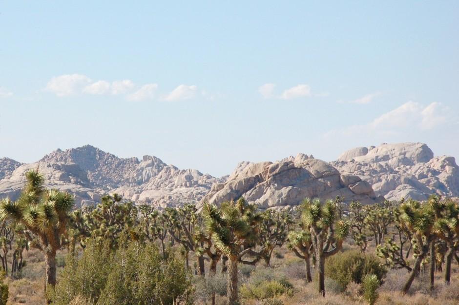 USA, Californie, Joshua Tree